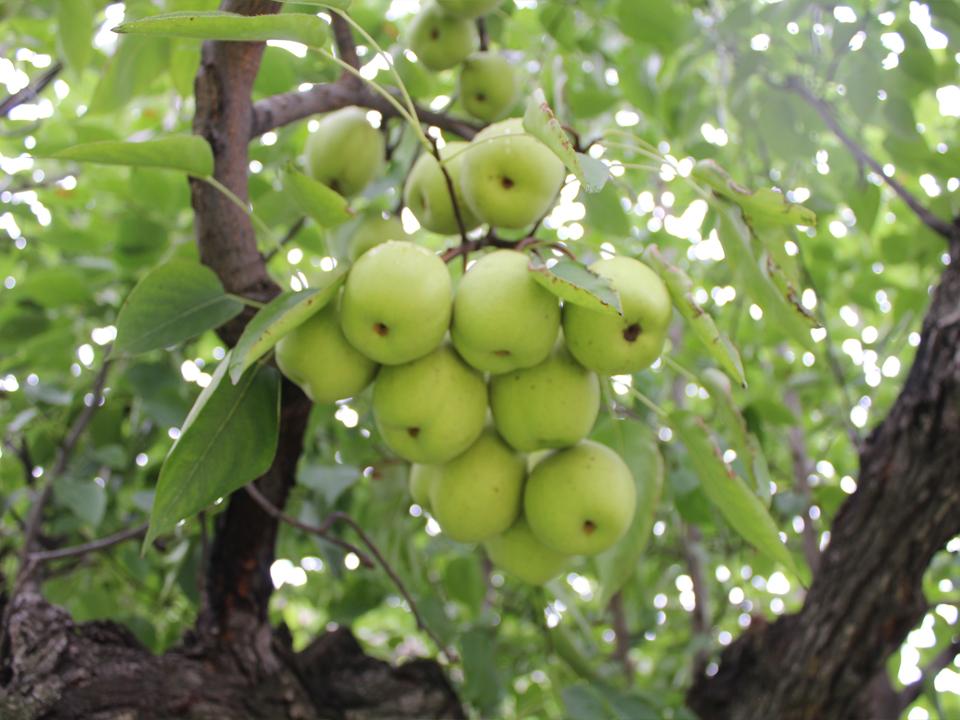 农科院苹果基地视频监控系统