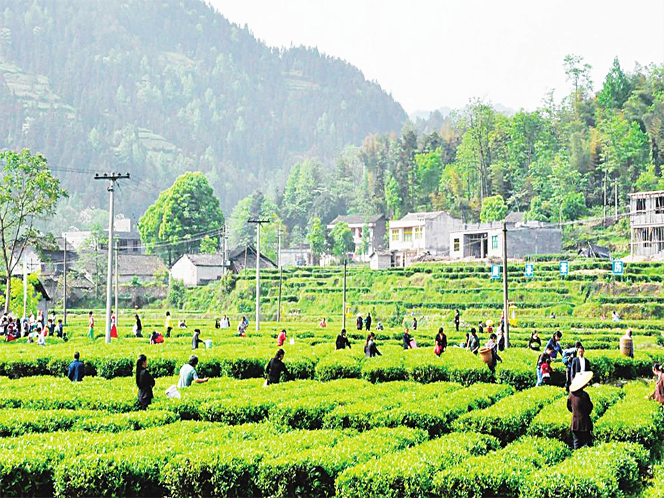 贵州农业视频监控系统